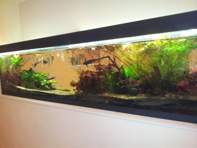 Akv ria ter ria na zak zku - Aquarium meduse design ...